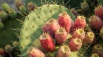 Organic Prickly Pear Seed Oil Review