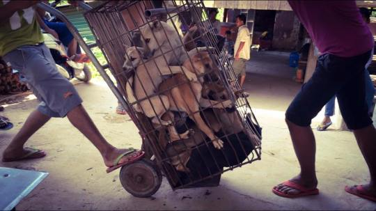 Marc Ching Animal Activist Yulin Meat Festival 2