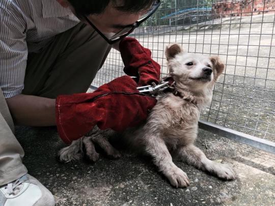 Seoul Korea, The Animal Hope & Wellness Foundation
