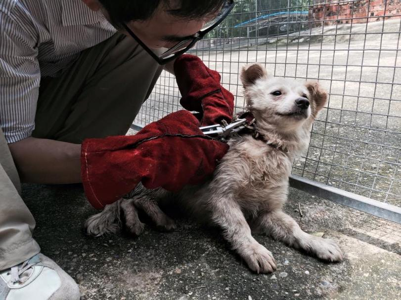 Seoul Korea, The Animal Hope & Wellness Foundation