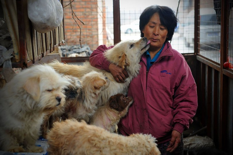 Yang Xiaoyun and dogs she's housed