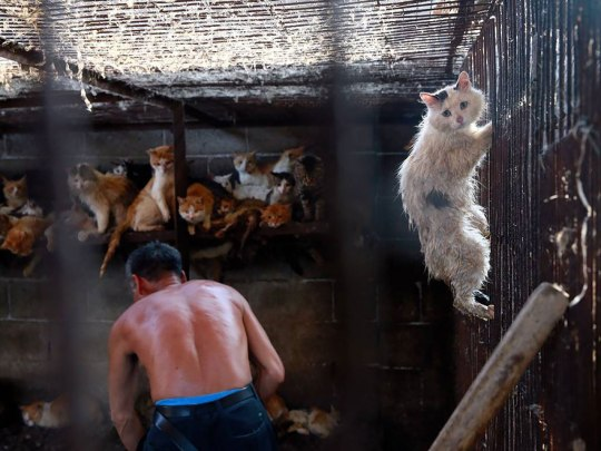 Yang Xiaoyun Teacher Saves Dogs Yulin Meat Festival 7