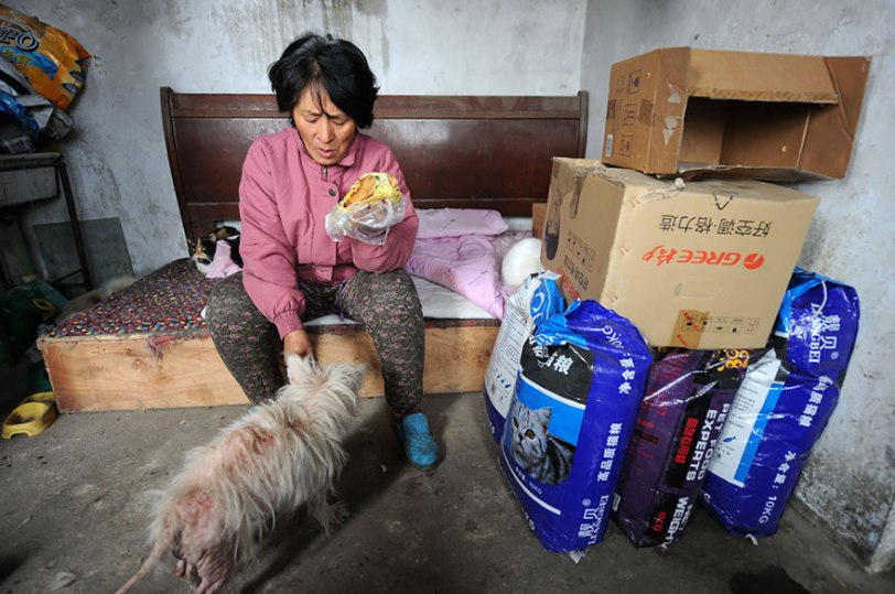Yang Xiaoyun Teacher Saves Dogs Yulin Meat Festival 8