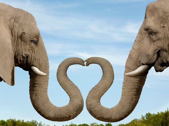 Elephants know the meaning of love