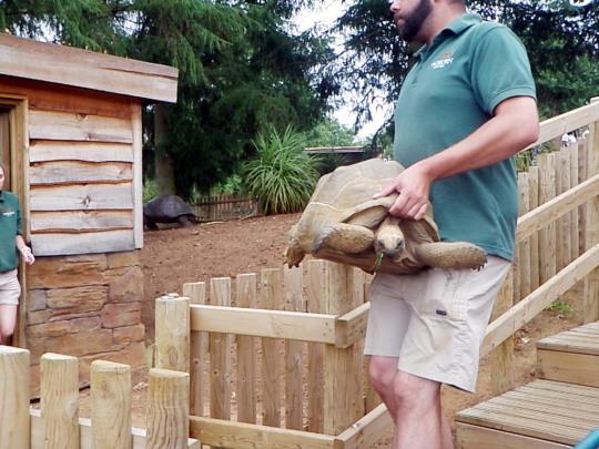 Safari Giant Tortoises Turtles